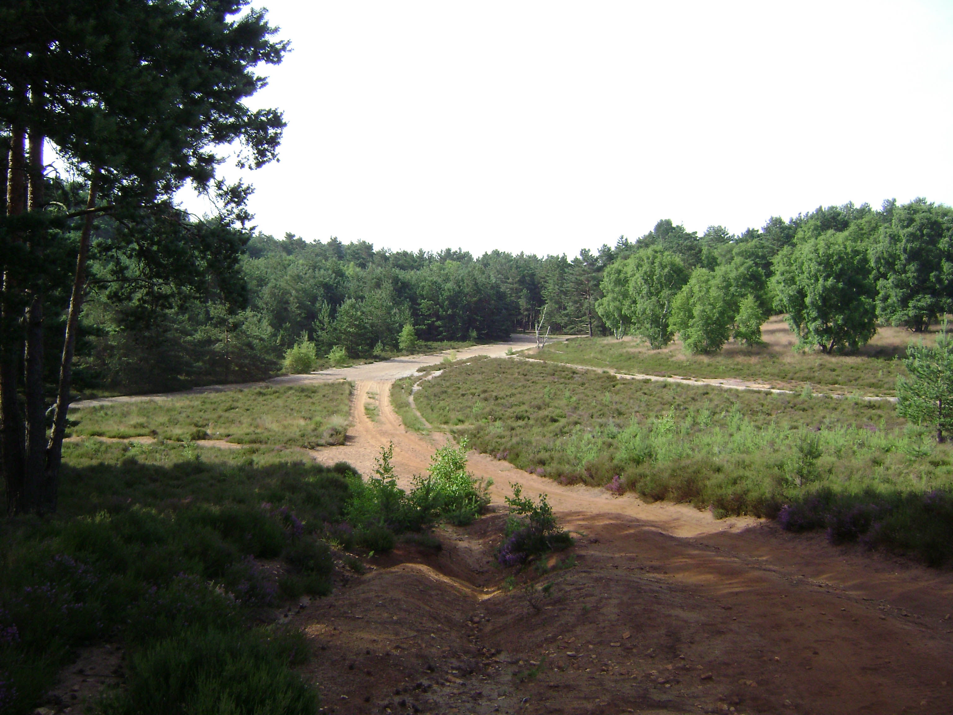 hankley-training-area-s1-22.jpg